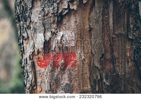 Hiking Marks On A Tree Trunk. Red And White Signal Along Hiking Trail. Signal Trail In The Mountains