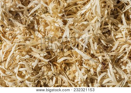 The Wood Sawdust Texture Material Background Closeup,