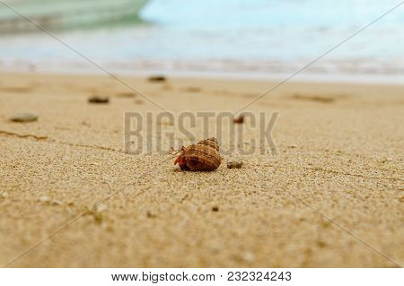 Hermit Crab On The Sandy Beach, Crab In The Shell