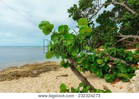 Wild Sandy Beach With Green Deciduous Plants, Nature Reserve, Natural Reserve, Nature Preserve, Wild