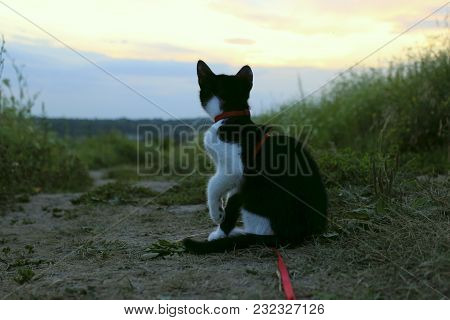 Silhouette Of Cat At Sunset. Cute Cat On The Road,sunset Background,cat Looking. Stray Kitten Lookin