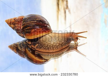 Gigantic Snail On A Beautiful Background , Medicine And Beauty Industry