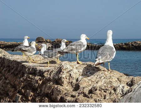 Seagulls On A Parapet On The Beach Of The Ocean In Morocco