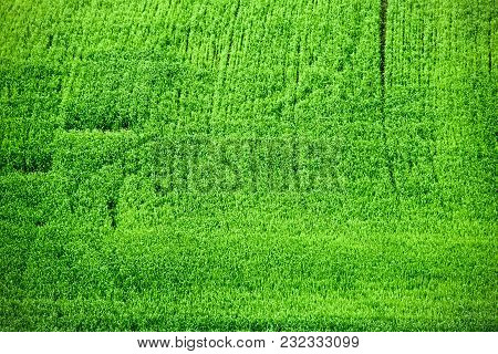 Green Field Bright Green Young Grass Wheat Barley Spring Field Shoots On The Field Young Grass