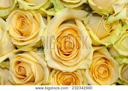 Bouquet Of Yellow Roses Closeup, Top View