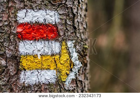 Tourist Color Sign On The Tree With An Arrow