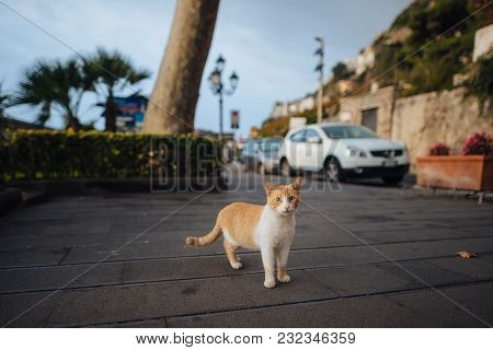 Portrait Of Wild Red Cat Relaxing On The Street