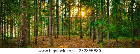 Panorama of a forest with the sunlight through the trees. Panoramic landscape