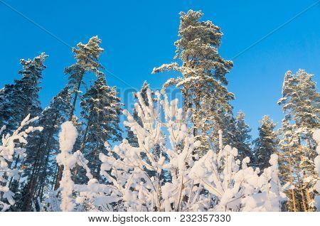 Frozen Woods December Frost