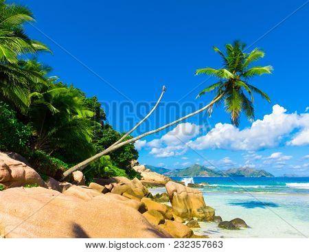 Sea Coconut Ideal