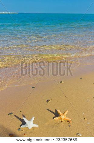 Starfish Stranded on a Beach