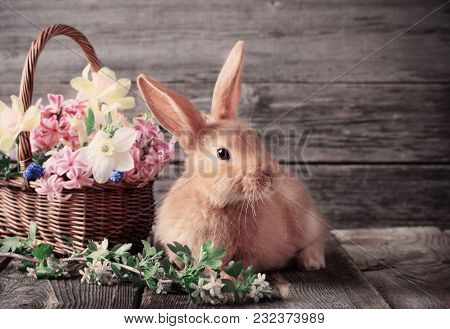 The Red Little Rabbit With Spring Flowers