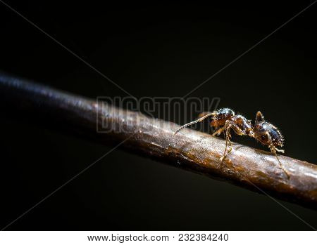 Forest Little Brown Ant On Tree Extreme Macro Photography