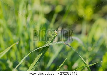 Green Stems Of Plants With Raindrops In The Morning