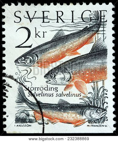 Luga, Russia - March 17, 2018: A Stamp Printed By Sweden Shows Arctic Char - Genus Of Salmonid Fish