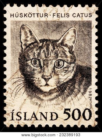 Luga, Russia - January 16, 2018: A Stamp Printed By Iceland Shows Beautiful Domestic Cat - A Small,