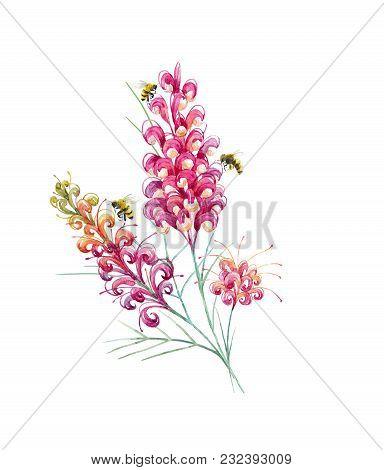 Beautiful Illustration With Watercolor Australian Tropical Grevillea Flowers