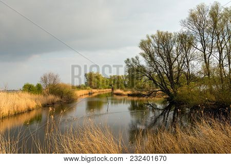 Tree Silhouettes Reflected In The Mirror Smooth Water Surface Of The Pond In The Dutch Nature Reserv