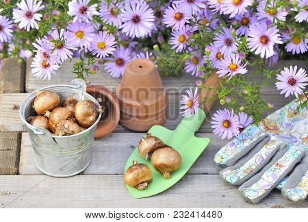 Flower Bulbs In Little Shovel With Gardening Gloves And Pink Flowers