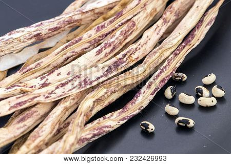 Dried Green-purple Or Tiger Pattern Yard Long Bean With Seed Ready For Cropping (sciencetific Name I