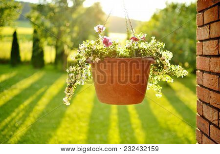 Beautiful View Of The Hanging Flower Pot, Brick Wall And Trees Casting A Long Shadows In The Backgro