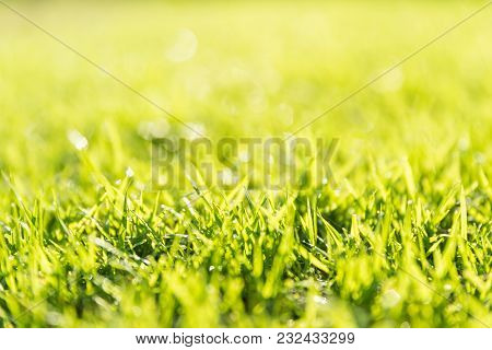Soft Focus And Close Up Green Grass Over Sunset. Earth Day Concept.