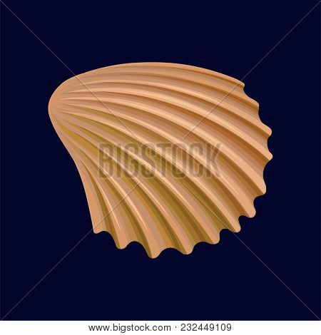 Rapana Shell, An Empty Shell Of A Sea Mollusk Vector Illustration Isolated On A Dark Blue Background