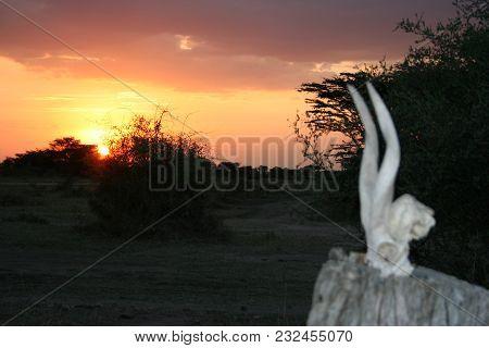 Sunset In The Heart Of African Savanna Masai Mara In Kenya.