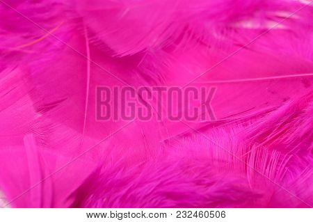 Colorful Feather Surface With Water Droplets And Bokeh Effect