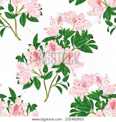 Seamless Texture Light Pink Rhododendron Twig With Flowers And Leaves Mountain Shrub Vintage Hand Dr