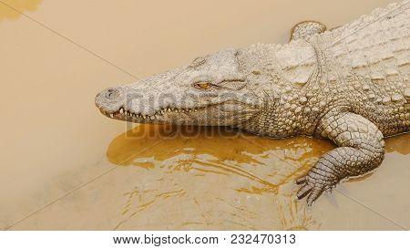 Crocodiles Resting At Crocodile Farm In Vietnam. Shot In 4k - 3840x2160, 30fps