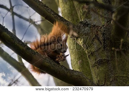 Cormorants Sit In The Tree In The Spring Sun