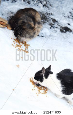 Stray Cats Eat On The Street Food In Winter