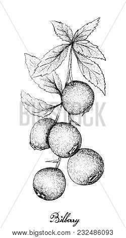 Berry Fruit, Illustration Hand Drawn Sketch Of Bilberries Isolated On White Background. High In Vita