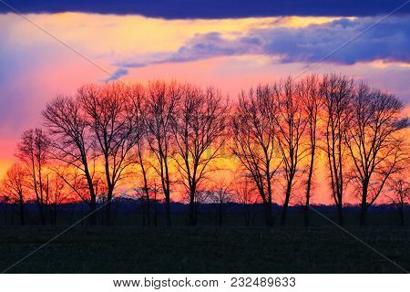 Silhouette Of Trees In The Spring Sunset, Warming After The Winter