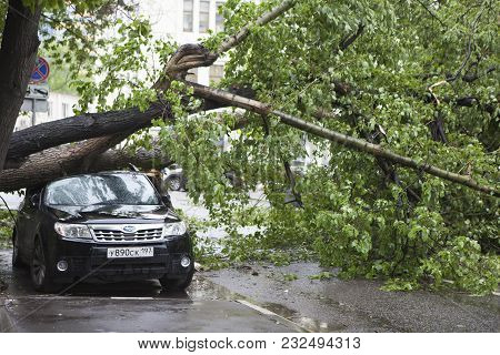 Hurricane In Moscow Knocked Down Trees. The Tree Fell On An Expensive Car.