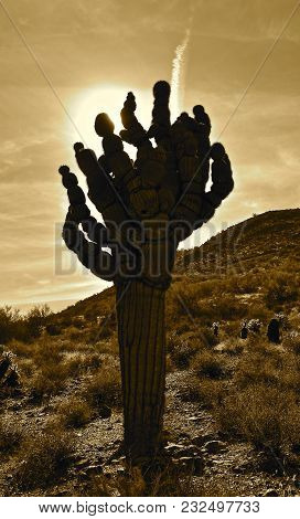 Unique Shaped Cactus Tree Silhouetted In The Sunrise