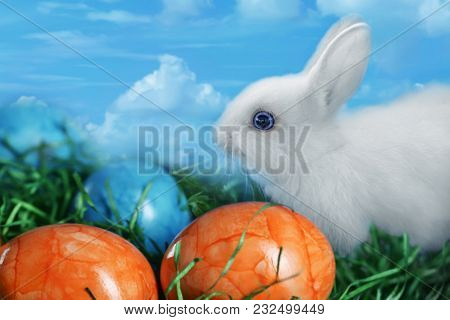 White Furry Rabbit Eats Grass Next To Multi-colored Easter Eggs, Easter Collage