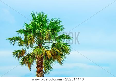 Tropical Palm Tree With Bright Blue Skies. Concept Of Warm Sunny Tropics As Vacation Travel Destinat