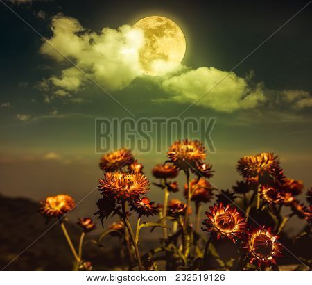 Beautiful Night Landscape Of Sky With Full Moon Behind Clouds Above Dry Straw Flowers. Serenity Natu