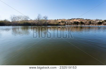 Beautiful Lake View Shot With Wild Canadian Goose Swims At The Lake. Desert Mountains With Houses Vi