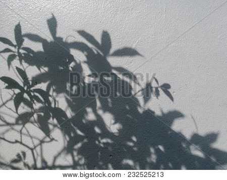 Tree Leaves Shadow On Wall Background, Abstract Background Cement Wall Shadow Light Concept