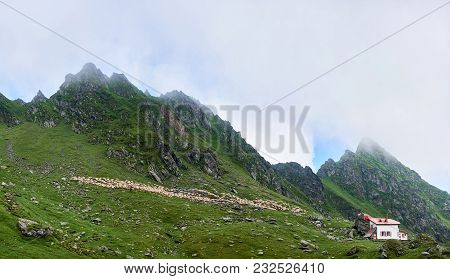 Flock Of Sheep On Alpine Pasture Near Lonely House In The Valley Fagaras Mountains, Transylvania, Ro