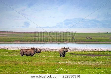 Endangered Black Rhino Or Diceros Bicornis On East African Savannah Plains