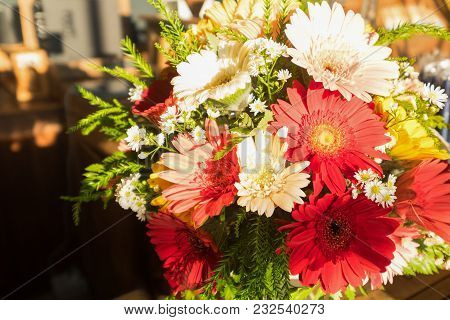 Bouquet Of Red And White African Daisy, Transvaal Daisy For Valentine Festival And Gift For The Love