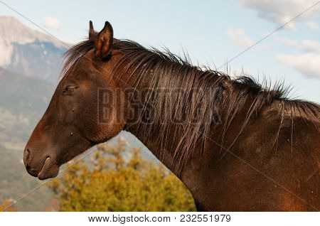 Close-up Of An Adult Brown Horse With Its Crest Shining In The Sun