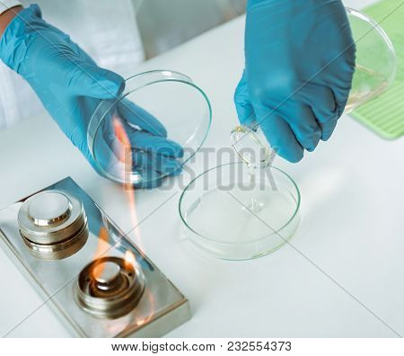 Microbiology. Hands Of A Microbiologist Pouring Agar Into A Petri Dish