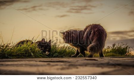 Cats Stray Sunset Moment Outdoors Natural Scene