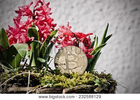 Bitcoin Coin Flower Concept