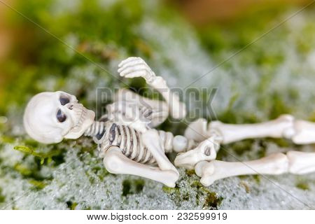 White skeleton dead body bone rests on moss with snow during winter time, soft focus blurred background